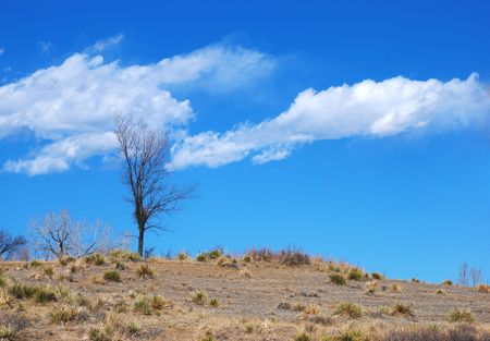foothills: Lone bare tree in winter on the dry steppe in the foothills of the Rocky Mountains, with clouds Stock Photo