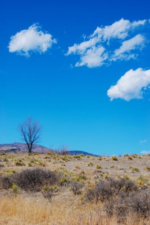 A lone tree stands on a hilltop in dry prairie country near the foothills of the Colorado Rocky Mountains