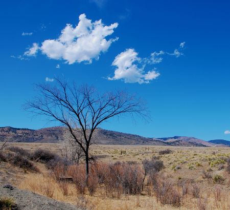 A bare tree stands on the prairie in winter on a bright day near the foothills of the Rocky Mountains
