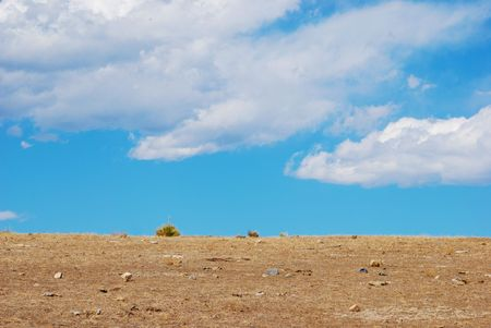 A couple of yucca plants stand on an empty hilltop horizon in a dry winter