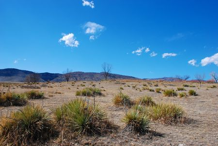 foothills: Open yucca and prairie grass field, with view of distant foothills