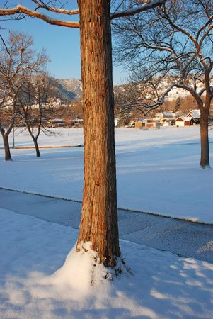 The trunk of a snowy tree stands in golden morning light, on a bright morning after a snowstorm photo