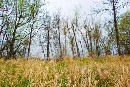 Bare trees of winter rise above a field of golden grass that is just starting to grow again in spring