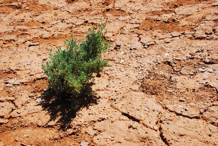 harsh: Small plant survives in a dry and harsh environment