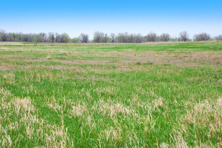 straightforward: Simple field or pasture of green grass in spring