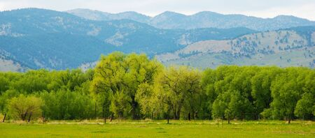 A line of bright green trees in spring with new leaves, against a backdrop of mountains in the Colorado Front Range photo