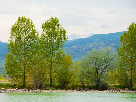 silty: Different types of trees line a silty lake, with new green leaves in spring