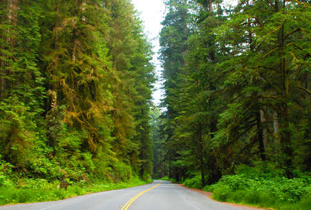 Quiet road through Redwood National Park in Northern California photo