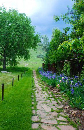 hillside: Blue Iris-lined rustic stone path leads to an open space hillside