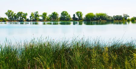 rushes: Rushes and native plants on the near side of a small and charming lake, with a line of trees on the far side