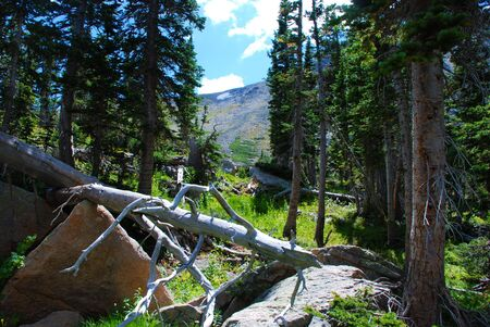 rockslide: A sun-bleached white tree trunk and other debris form a normal forest scene in the Colorado Rocky Mountains.