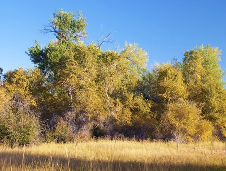 Trees turn golden at the beginning of autumn on the Colorado prairie photo