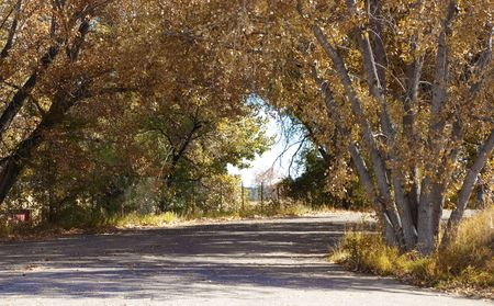 traveled: Bronze trees shade a road in autumn with view of sky in the center