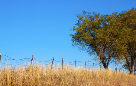 wire fence: Trees in a field by an old barbed wire fence