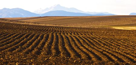Plowed field with view of distant Longs Peak in Colorado in Winter