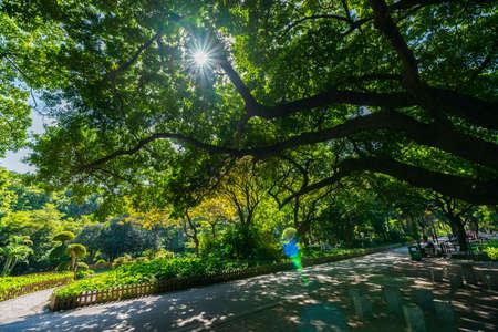 佛山公園の木 写真素材