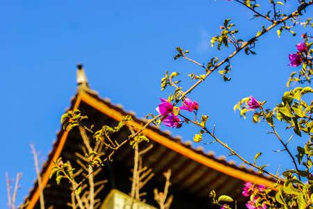 麗の花 写真素材