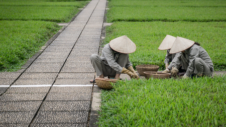 Ho Chi Minh city, Vietnam - November 2015: Unidentified gardeners working in a park on grass Editorial