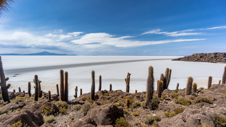 Incahuasi island in the Uyuni Saline Salar de Uyuni, Aitiplano, Bolivia Stock Photo