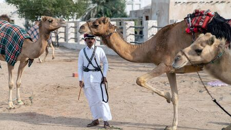 Doha, Qatar - February 2019: Qatari Police with camel who patrol the tourist Souk Waqif Stok Fotoğraf - 128024512