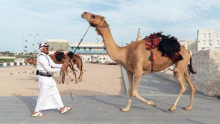 Doha, Qatar - February 2019: Qatari Police with camel who patrol the tourist Souk Waqif