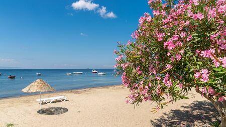 Beach of Erdek with beach umbrellas and pink flowers with a view of Sea of Marmara