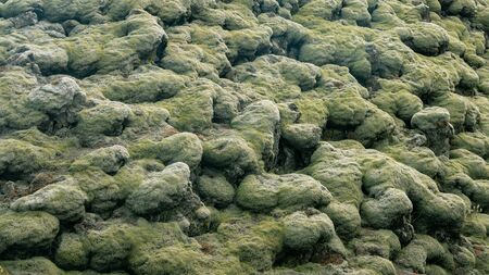 Moss covered lava fields, also known as green lava in Skaftareldahraun, Iceland 写真素材