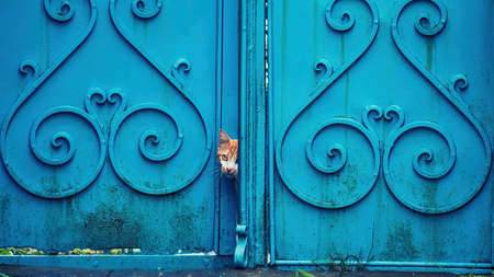 Cat peeking out from from a vintage blue door.