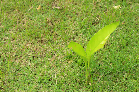 forestation: Germination is the new life of green seedlings.