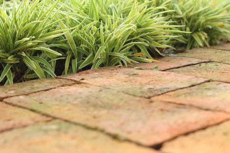 corridors: Cement tile corridors in a garden at the park Stock Photo