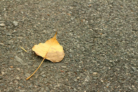 ry: Brown leaves on a background of cement.