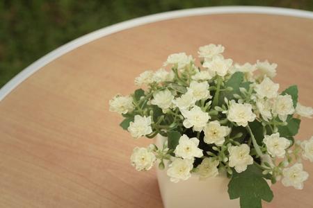 Weiße Blumen In Töpfen Auf Dem Tisch. Lizenzfreie Fotos, Bilder Und ...
