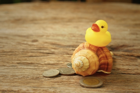 Yellow Rubber Duck , Conch With Money Of Thai Bath. Stock Photo ...