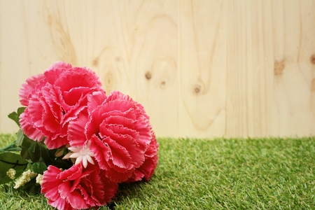 Pink flower on background of green grass. Stock Photo