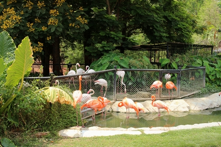 Flamingos in a nature at the zoo.