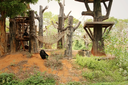 Monkeys in a nature at the zoo. Stock Photo