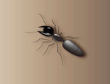 arthropod: ant Illustration