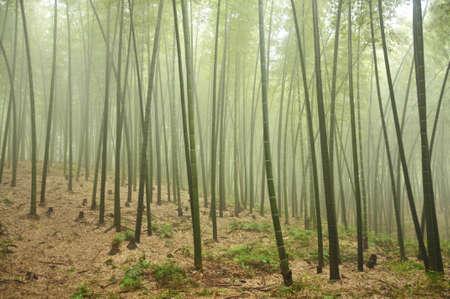 햇빛에 대나무 그 로브 스톡 콘텐츠