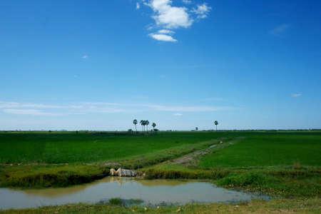 tonle sap: Plain of Cambodias Tonle Sap Lake in the dry season