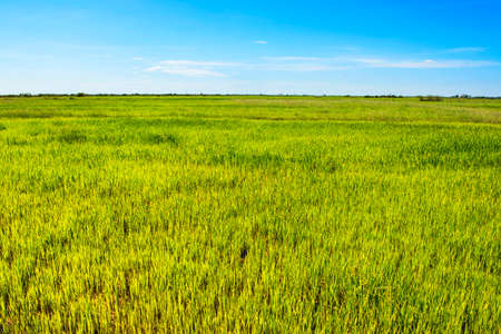 sap: Plain of Cambodias Tonle Sap Lake in the dry season
