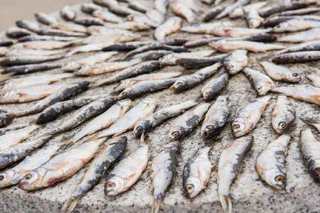 whitefish: The drying of Hulun lake small whitefish