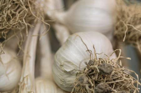 hanged: Hanged garlics