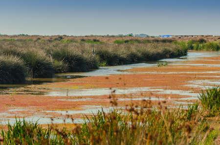 Wetlands in the Kizilirmak delta Black Sea Province of Turkey