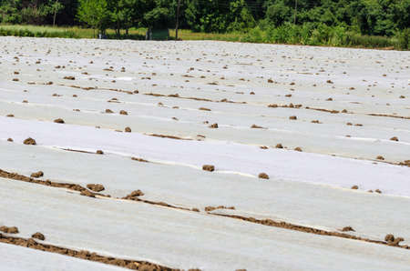 Ground with plastic protecting strips and covers for plant in field Stock Photo