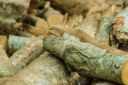 sawn: Freshly cut tree logs piled up.Cut Logs In Logging Area Stock Photo