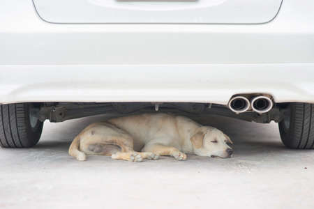 A dog resting under the car