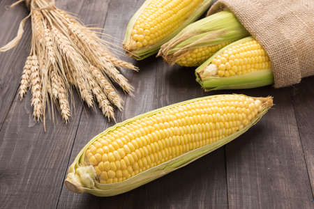 stalk: Fresh organic yellow sweet corn on wooden table.