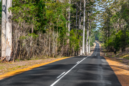 karri: Highway through Australian forest, Western Australia