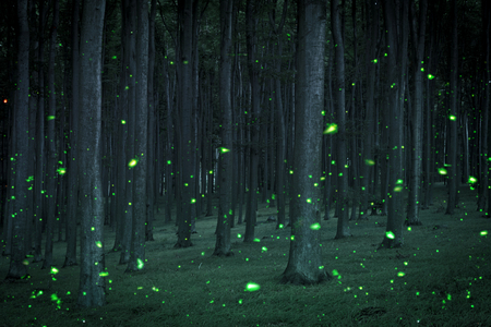Night coniferous forest with magical fireflies