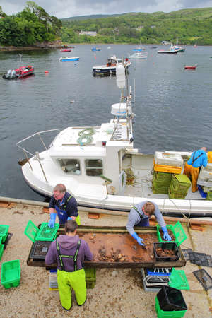 ISLE OF SKYE, UK - JUNE 18, 2017: Fishermen unloading a catch of crabs at Portree harbor, Highlands, Scotland
